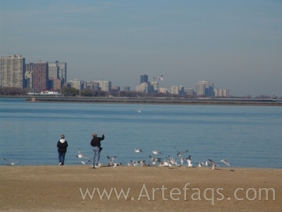 Stock photo of Feeding The Seagulls - Chicago, Illinois