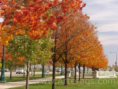 Stock photo of Trees - Chicago, Illinois